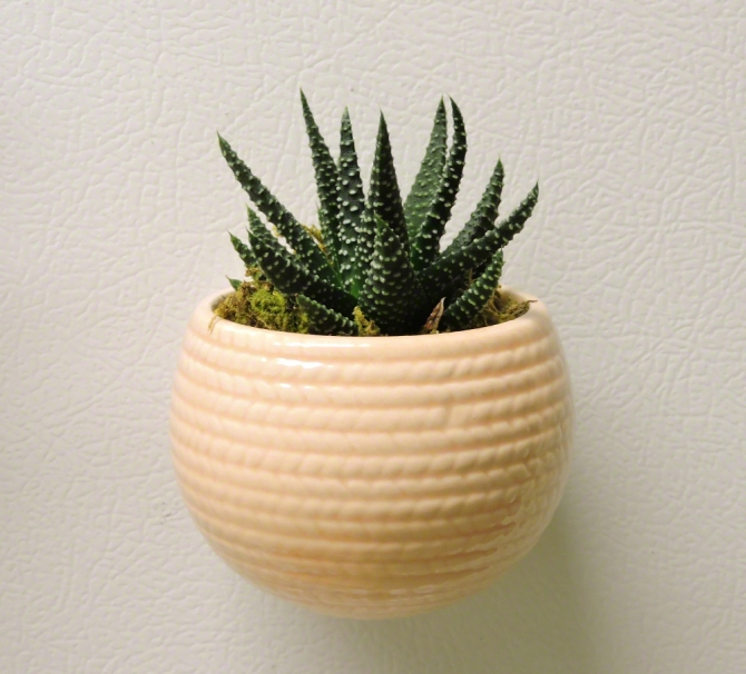 Mini Aloe Plant ©Jackie Brooks