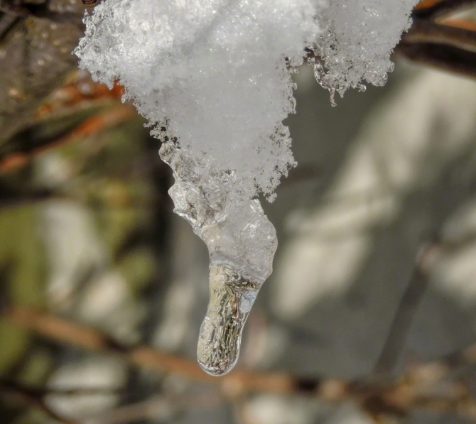 Frozen Drop ©Jackie Brooks
