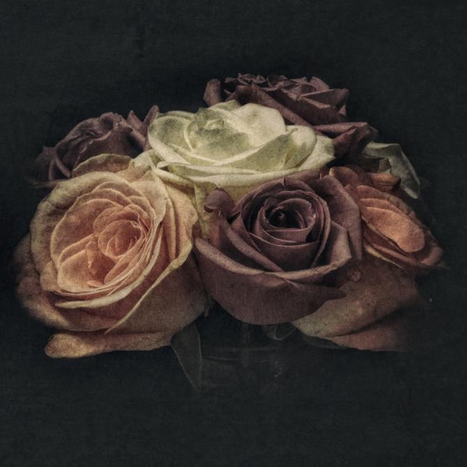Grungy Roses ©Jackie Brooks