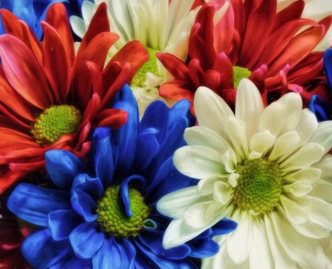 Patriotic Daisies ©Jackie Brooks